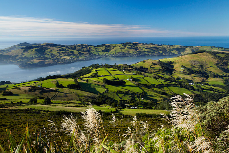 Farmland near Dunedin, South Island, New Zealand
