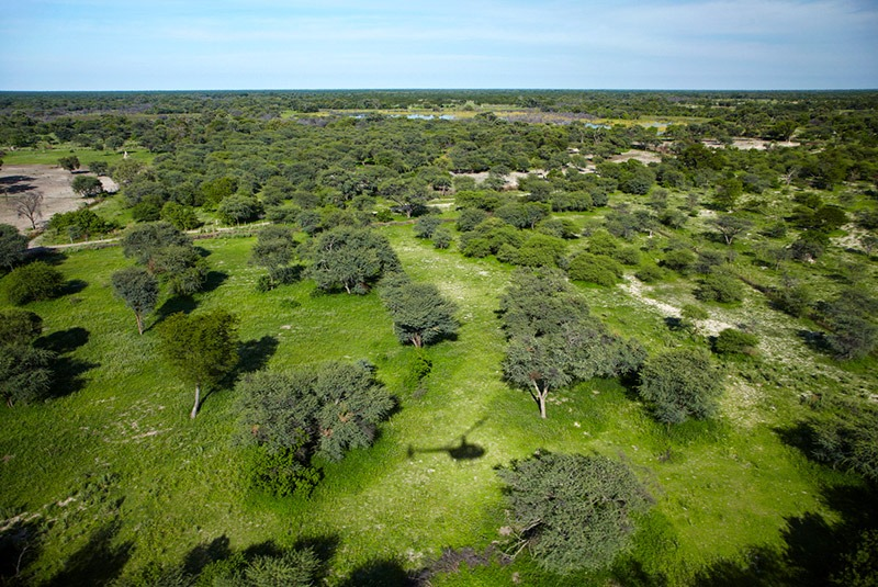 A helicopter flies over the Okavango Delta, Botswana