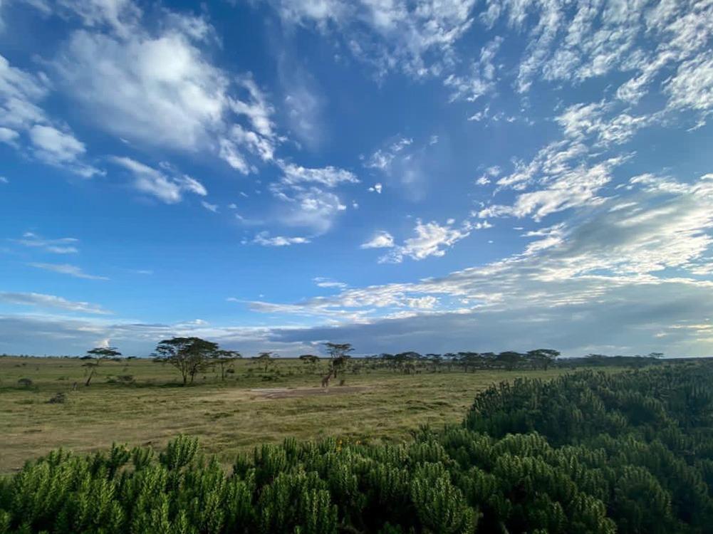 Lush savannah in the Masai Mara, Kenya