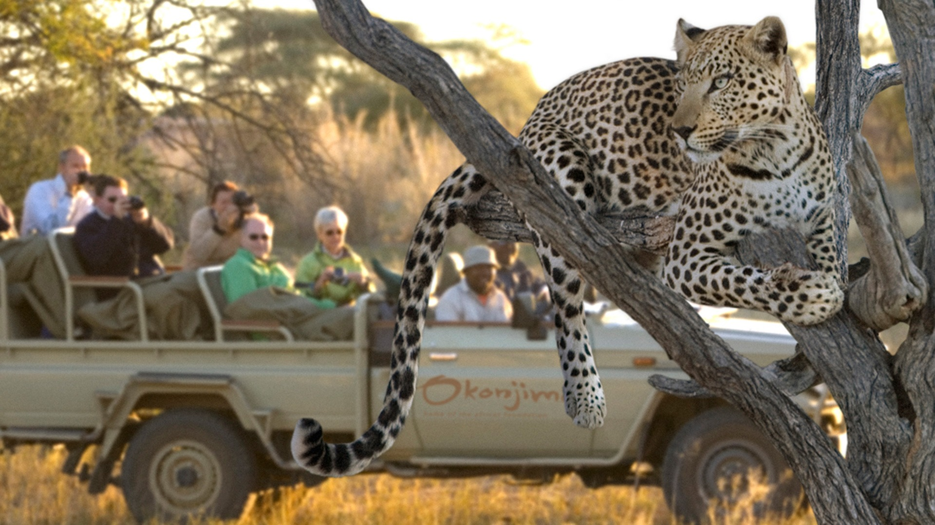 Leopard tracking at Okonjima Nature Reserve, Namibia