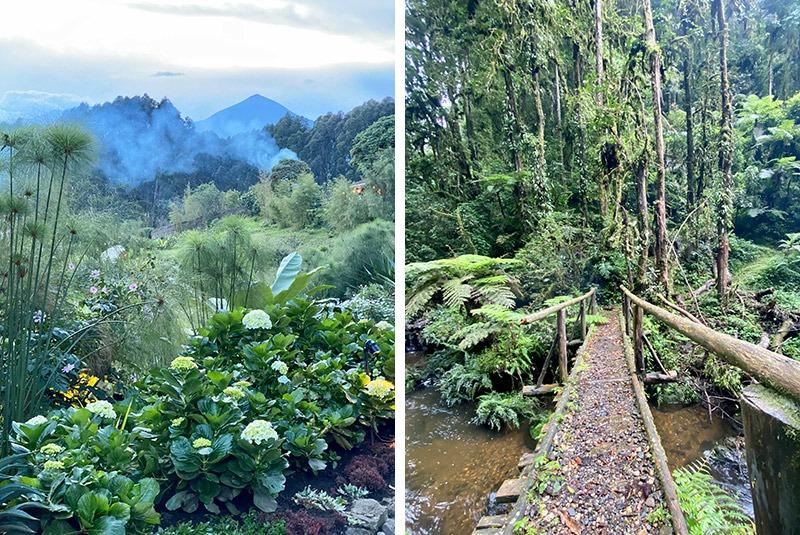 Jungle vegetation in Volcanoes National Park, Rwanda