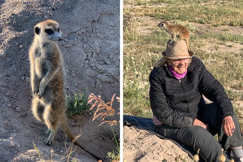 Meerkat experience at Jack's Campin the Makgadikgadi Pans, Botswana