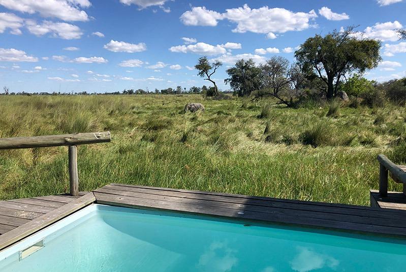 An elephant seen from a plunge pool at Vumbura Plains, Botswana