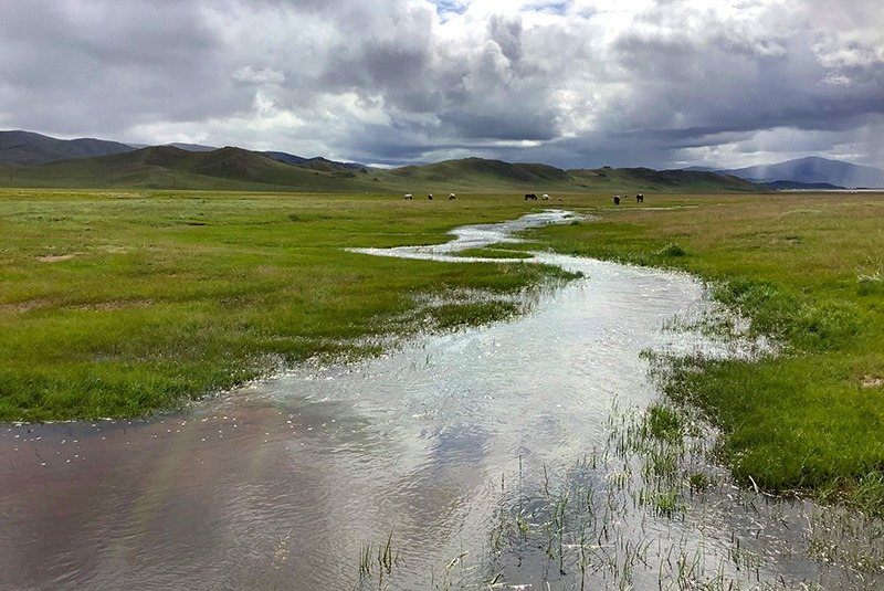 Steppe landscape with green grass and water, Mongolia
