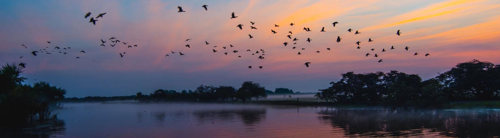 Birds at Sunrise, Kakadu, Australia