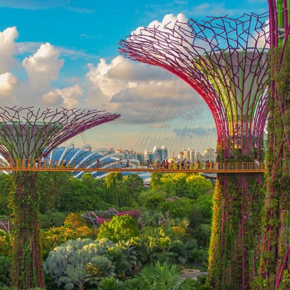 Supertree grove in the Gardens by the Bay, Singapore